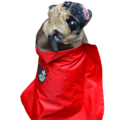 Red Dual layered waterproof Raincoat with a hood