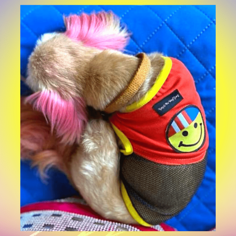 Black net T-Shirt, Tees with Red top and a Patch   Yellow Rib all around the dress for Dog, Cat and puppies