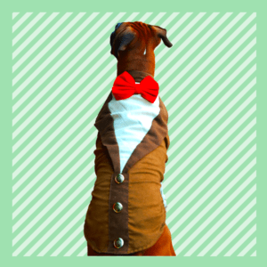 Brown Suede Tuxedo with soft Red lining & Red Bow | Matching Red leash