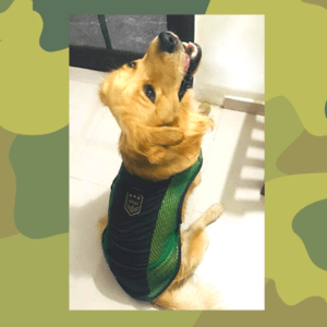 Green Net t-Shirt with Army Patch | Black Piping in All The Corners | Dog & Cats