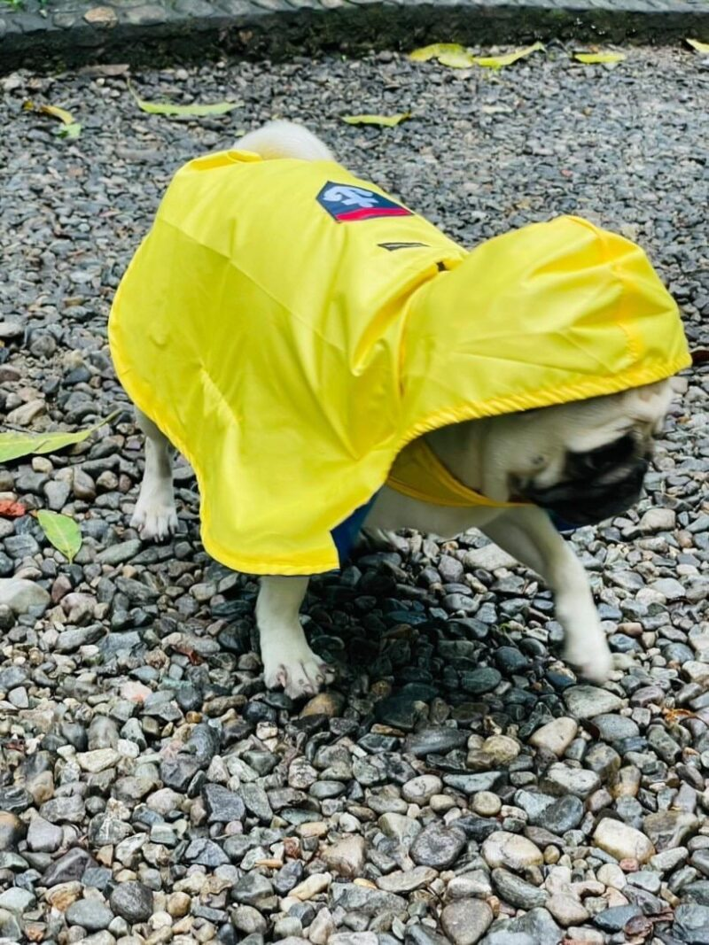 Kitty And The Woof Gang - Yellow Raincoat