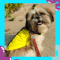 Yellow T-Shirt/Tees for Dog Clothes Summer Apparel