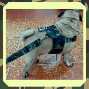 Camouflage Body Harness For Dogs & Cats with a D - ring for Leash