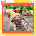 Beautiful Brown Floral Winter Jacket With Brown Faux Fur & Faux Leather Bow   Dogs & Cats