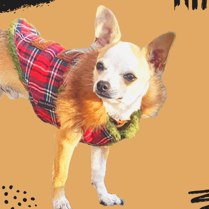 Scottish print red jacket brown fur collar winter wear thick lining adjustable comfortable | Dogs & Cats