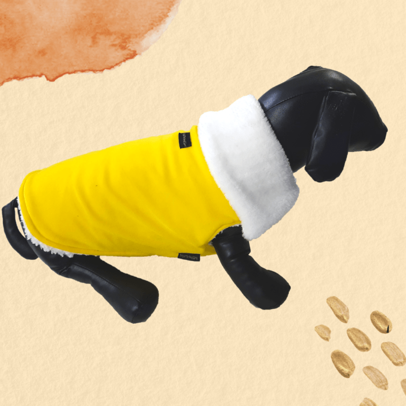 Yellow Velvet Winter Jacket With White Collar & White Soft Warm Lining | Dogs & Cats