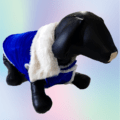 Blue Velvet Winter Jacket With White Collar & White Soft Warm Lining   Dogs & Cats