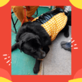 Yellow White Check Jacket With Black Faux Fur, Soft & Thick Lining   Cats & Dogs