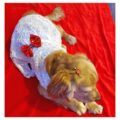 White Spider Net Dress With Gold Bow   Gown For Dogs & Cats