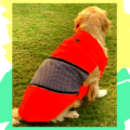 Neon Shirt With Black & White Check Patch With Metallic Zip   Dogs & Cats