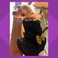 LIl Black Dress - Black Spider Net Dress With Gold Bow | Gown For Dogs & Cats
