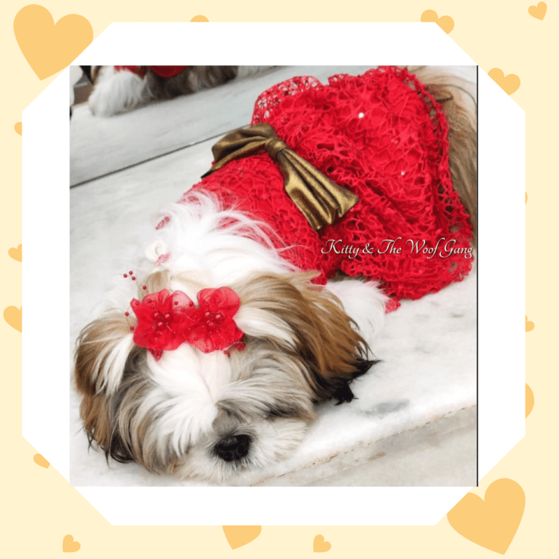 Red Spider Net Dress With Gold Bow   Gown For Dogs & Cats