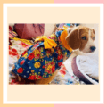 Blue Floral Dress For Dogs & Cats With Bow And Collar