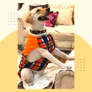 Multi color Check Shirt With Orange Top - Adjustable - Dogs & Cats