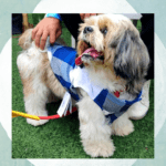 Blue Check Shirt - White Top - Adjustable | Dogs & Cats