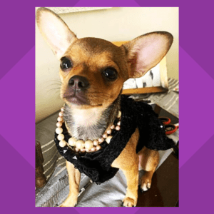 LIl Black Dress - Black Spider Net Dress With Gold Bow   Gown For Dogs & Cats