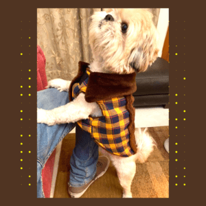 Blue Yellow Check Jacket With Brown Collar & Soft Thick Brown Lining | Cats & Dogs