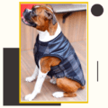 Grey Check Winter Jacket With Faux Leather Top & Grey Rib   Dogs & Cats