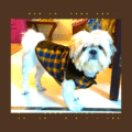 Blue Yellow Check Jacket With Brown Collar & Soft Thick Brown Lining   Cats & Dogs