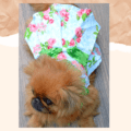Pretty Floral Dress With Sequence Collar And Bow Dress For Cats & Dogs