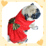 Red Spider Net Dress With Gold Bow | Gown For Dogs & Cats