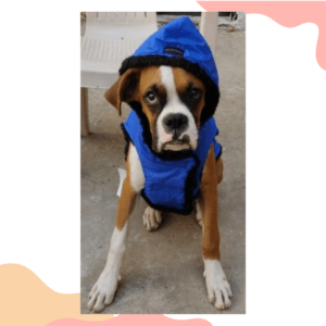 Blue Waterproof Hoodie Jacket With Reflector & D For Leash   Winter Wear For Dogs & Cats (Copy)