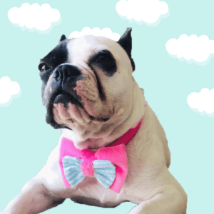 dog bow cat bow pet bow pink soft