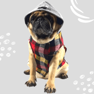 red blue grey check shirt with hoodie dog cat pet