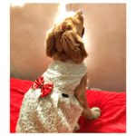 White Spider Net Dress With Gold Bow | Gown For Dogs & Cats